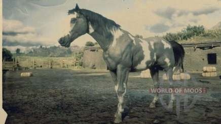 Grey overo American painthorse