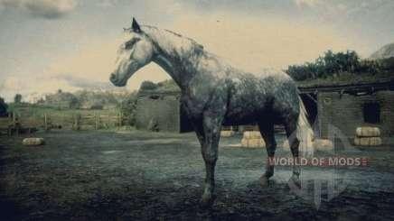 Dark grey dappled Hungarian half-breed