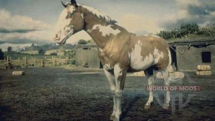Overo American painthorse
