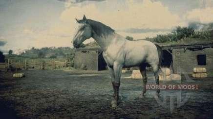 Grey Kentucky horse