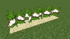 Desert Cotton Mod for Minecraft