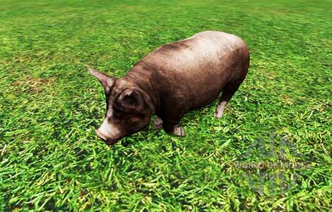 Animals for Farming Simulator 2015