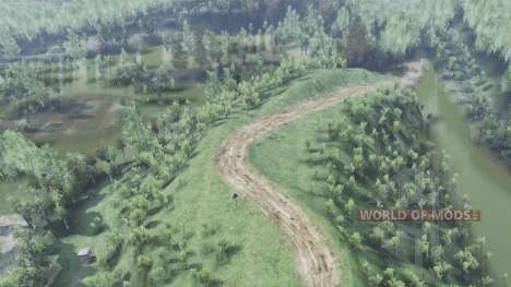 Birch forest for Spin Tires